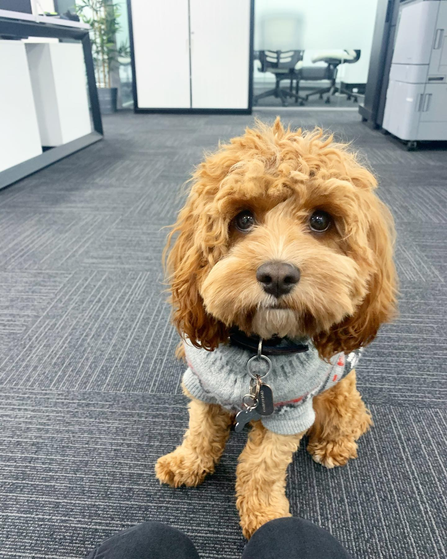 Alfie is looking for an Office Administrator to come and join the WOW Recruitment  team!!! If you have anyone in your network that might be interested in helping Alfie keep our office in order and work on key projects alongside the directors, please reach out and we'll be in touch ️ Thank you!!!  #Hiring #WOW #RecruitmentHappy #WorkHappy #DoWhatYouLove