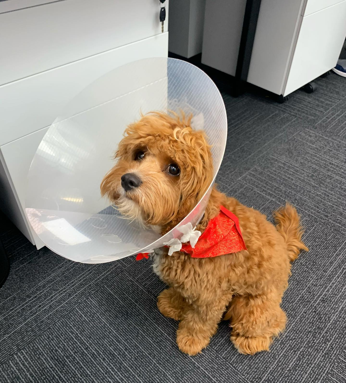 Our bundle of joy... Even with a cone on his head 🥰 HAPPY FRIDAY!! #dowhatyoulove #workhappy