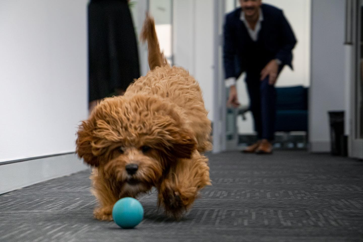 Running into the long weekend like #officedog #officepup